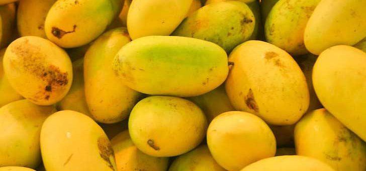 پھلوں کا بادشاہ آم، مزے اور صحت سے بھرپور پھل