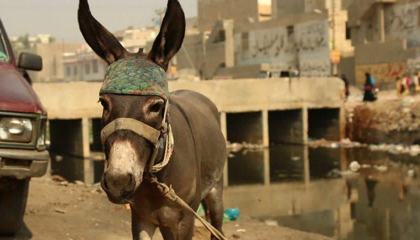 کراچی: گودام سے 40 گدھوں کی کھالیں برآمد، گوشت کہاں گیا؟