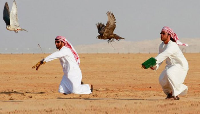 تلور کاشکار۔۔۔ عرب شہزادوں کے لئے خیمہ بستی سجا دی گئی