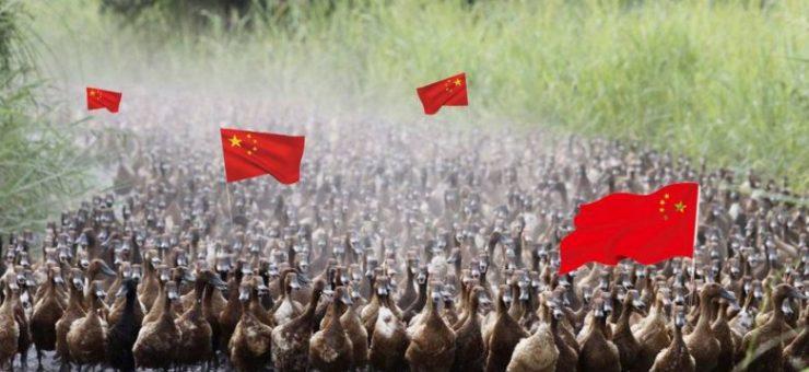 ٹڈی دل کے خلاف جنگ، چین پاکستان میں ڈک آرمی بھیجنے کو تیار